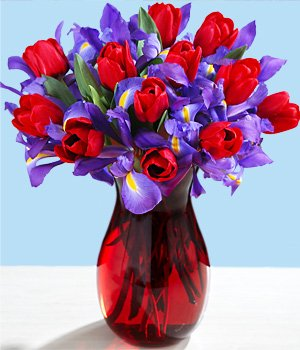 Bloemen Bestellen - Met onze tabel kunt u de 7 beste online bloemisten vergelijken die bloemen bezorgen tegen de beste prijs, voorwaarden en natuurlijk kwaliteit. Zo vindt u snel de beste bloemen bezorgservice die aansluit bij uw wensen.